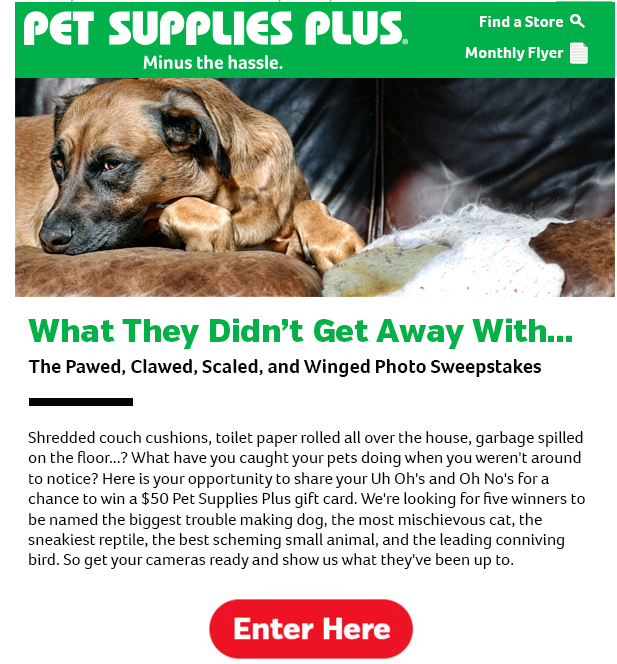 eCommerce for Pet Stores